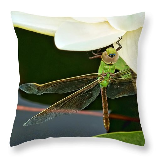 Dragonfly Throw Pillow featuring the photograph Beneath by Nikolyn McDonald