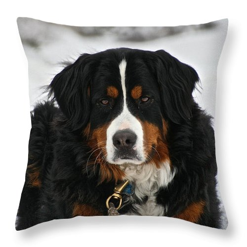 Outdoors Throw Pillow featuring the photograph Bernese Mountain Dog by Susan Herber