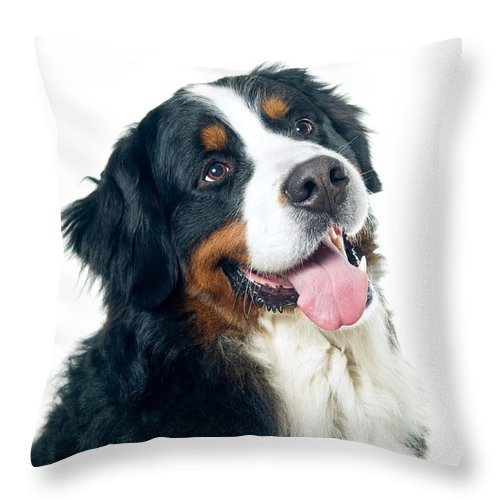Animal Throw Pillow featuring the photograph Bernese Mountain Dog by Viktor Pravdica