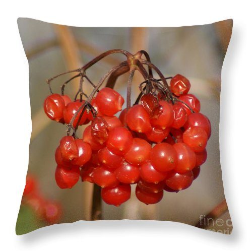 Autumn Throw Pillow featuring the photograph Berries by Carol Lynch