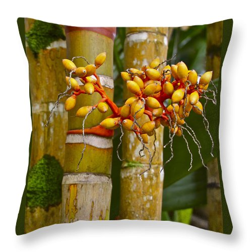 Bamboo Throw Pillow featuring the photograph Berries On Bamboo Hawaii by Venetia Featherstone-Witty