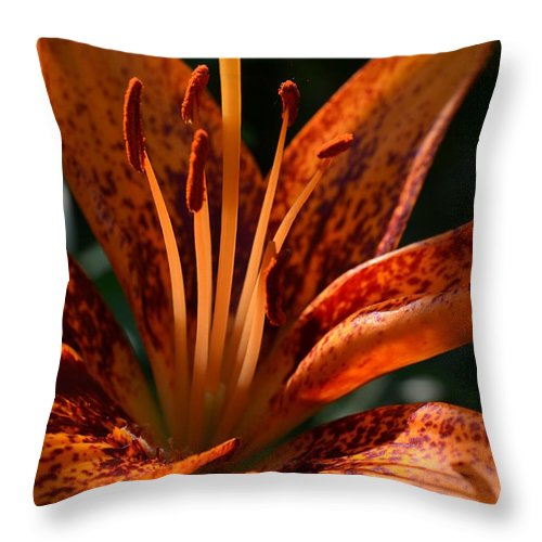 Bespeckled Throw Pillow featuring the photograph Bespeckled by Lisa Thomas