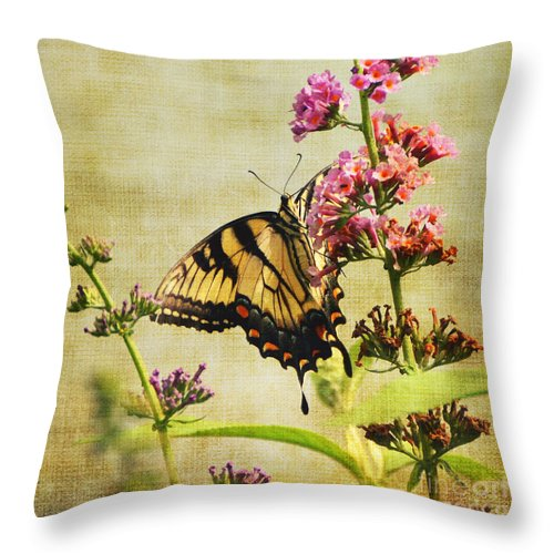 Butterfly Throw Pillow featuring the photograph Best View by Judy Wolinsky