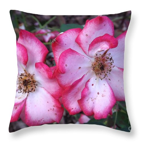 Betty Boop Throw Pillow featuring the photograph Betty Boop Roses by Sara Raber