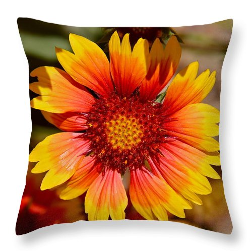 Flower Throw Pillow featuring the photograph Bewitched by Denise Mazzocco