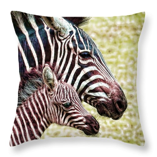 Zebra Throw Pillow featuring the photograph Big And Little by Jaki Miller
