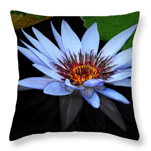 Waterlily Throw Pillow featuring the photograph Big Blue by Dave Mills