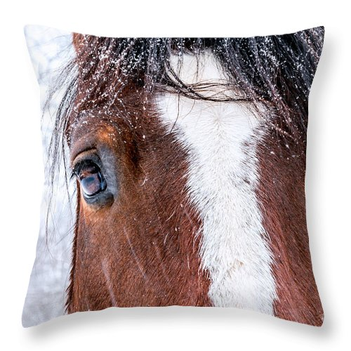 Horse Throw Pillow featuring the photograph Big Brown Eyes by Mary Smyth