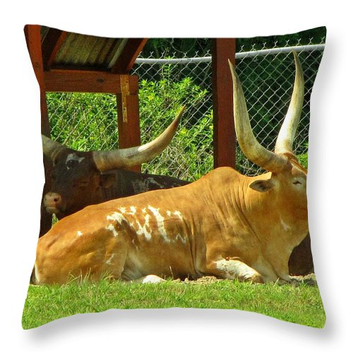 Cattle Throw Pillow featuring the photograph Big Horns by MTBobbins Photography