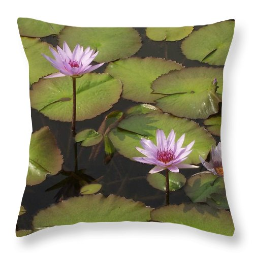 Water Throw Pillow featuring the photograph Biltmore Water Lillies by Brook Steed