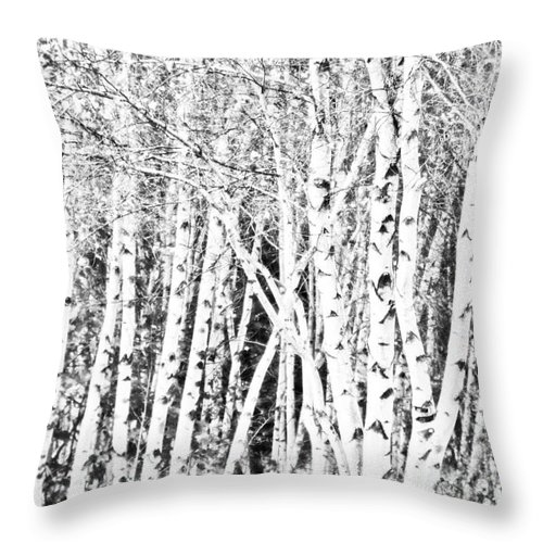 Birch Trees Throw Pillow featuring the photograph Birch Forest by Alana Ranney