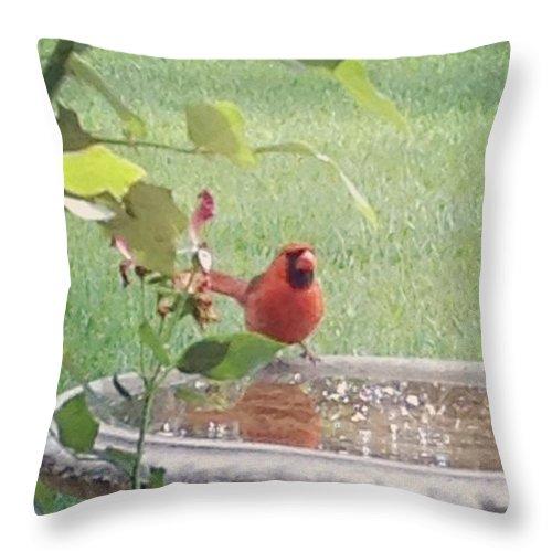 Birds Throw Pillow featuring the photograph Bird Bath by Marian Palucci-Lonzetta