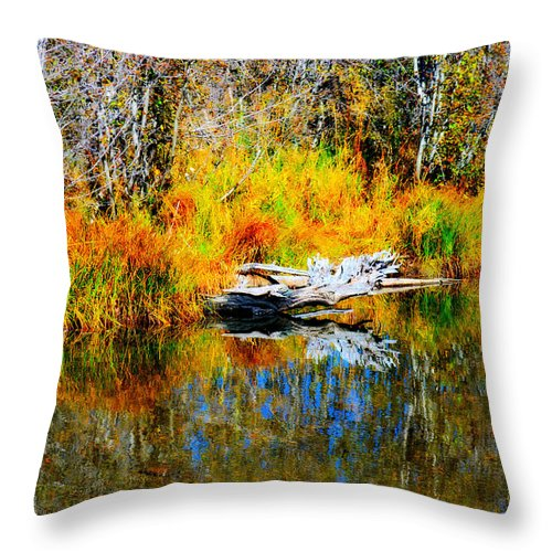Branches Throw Pillow featuring the photograph Bird Branch Reflection by Marcy Wagman