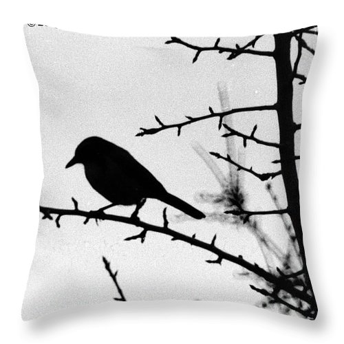 Birds Throw Pillow featuring the photograph Bird In B And W by Karl Rose