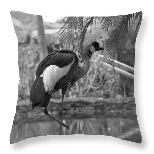 Landscape Throw Pillow featuring the photograph Bird In Paradise by Athala Carole Bruckner