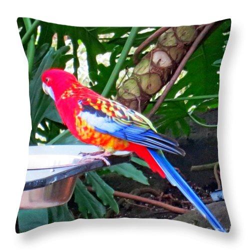 Parrot Throw Pillow featuring the photograph Bird by Lena Photo Art
