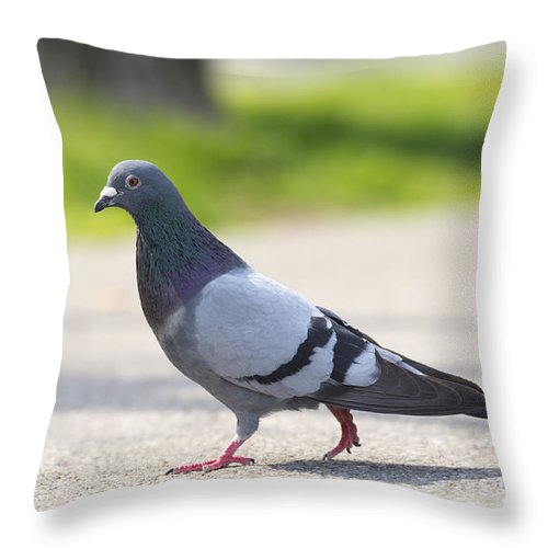 Bird Throw Pillow featuring the photograph Bird by Mats Silvan