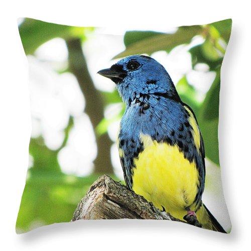 Bird Throw Pillow featuring the photograph Bird by MTBobbins Photography