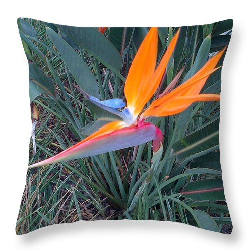 Winter Throw Pillow featuring the photograph Bird Of Paradise by George Pedro