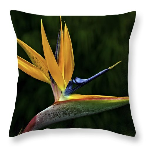 Flower Throw Pillow featuring the photograph Bird Of Paradise by Maria Coulson