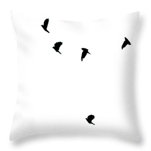 Bird Throw Pillow featuring the photograph Bird Shadows by Martin Newman