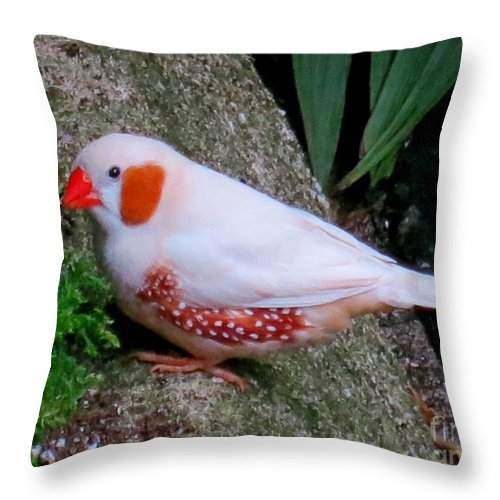 Bird Throw Pillow featuring the photograph Male Zebra Finch by Lena Photo Art