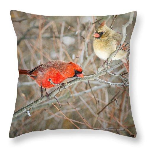 Cardinals Throw Pillow featuring the photograph Birds Of A Feather by Peg Runyan