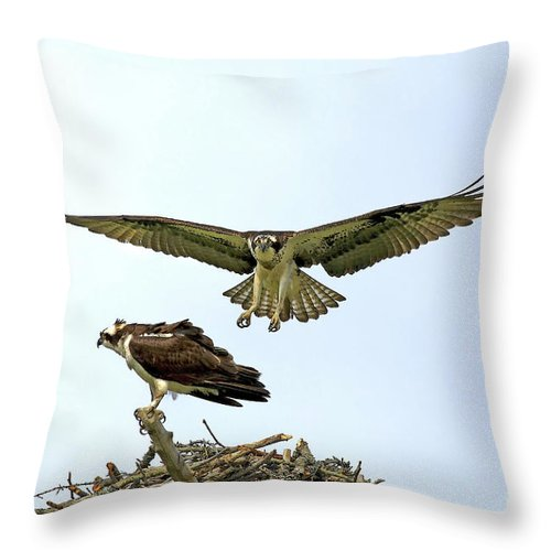 Birds Throw Pillow featuring the photograph Birds Of Prey by Deborah Benoit