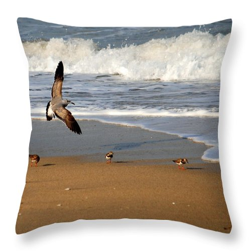 Laughing Gull Throw Pillow featuring the photograph Birds On The Beach by Larry Ward