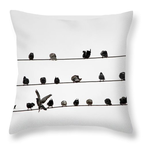 Amazon Rainforest Throw Pillow featuring the photograph Birds Pattern by Ricardo Lima