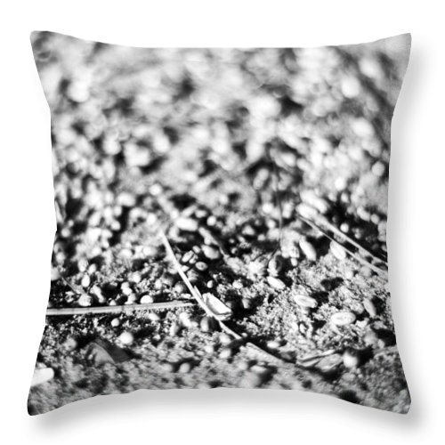 Abstract Throw Pillow featuring the photograph Birdseed by Nicole Parks
