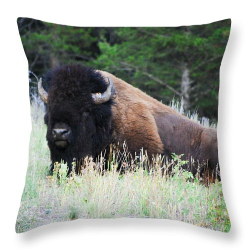 Bison Throw Pillow featuring the photograph Bison At Rest by Raymond J Deuso
