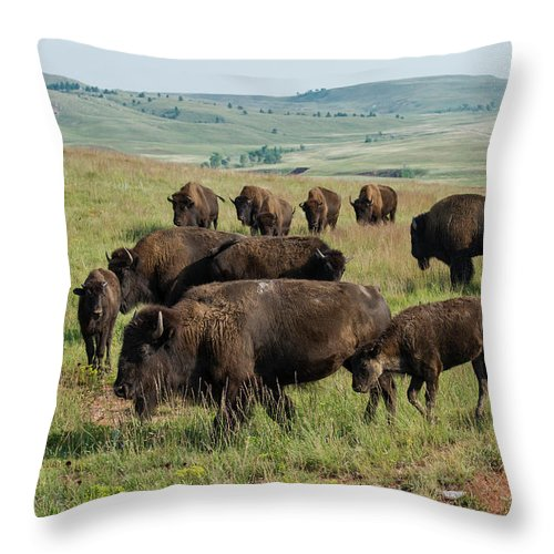 Grass Throw Pillow featuring the photograph Bison Buffalo In Wind Cave National Park by Mark Newman
