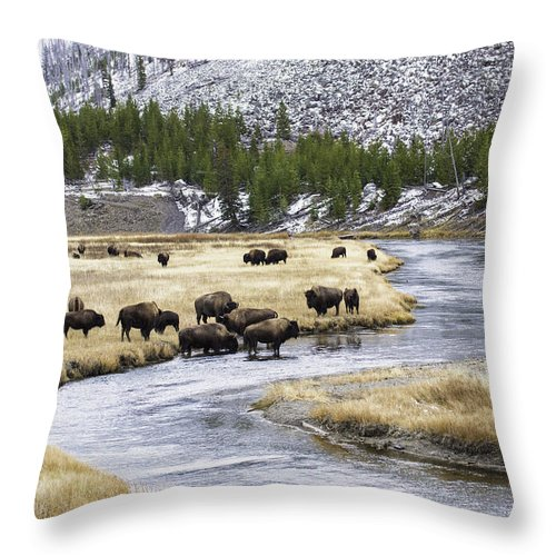 Bison Throw Pillow featuring the photograph Bison By The Madison by Carolyn Fox