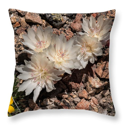 Bitterroot Throw Pillow featuring the photograph Bitterroot by Kathleen Bishop