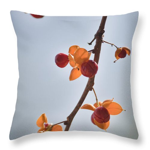 Bittersweet Throw Pillow featuring the photograph Bittersweet Vine by Teresa Mucha