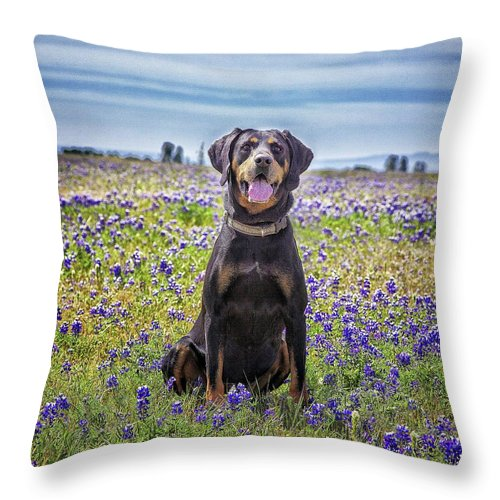Animal Themes Throw Pillow featuring the photograph Black And Tan Coonhound In Field Of by Sunmallia Photography