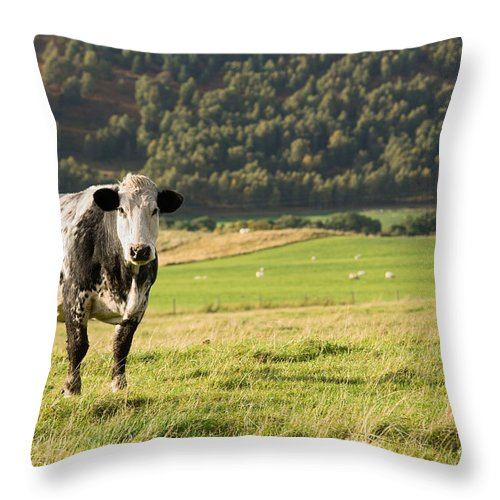 Cow Throw Pillow featuring the photograph Black And White Cow by Jane Rix