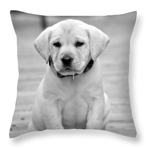 Puppy Prints Throw Pillow featuring the photograph Black And White Puppy by Kristina Deane