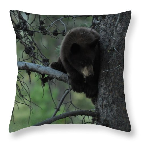 Black Bear Throw Pillow featuring the photograph Black Bear Cub in Tree by Frank Madia