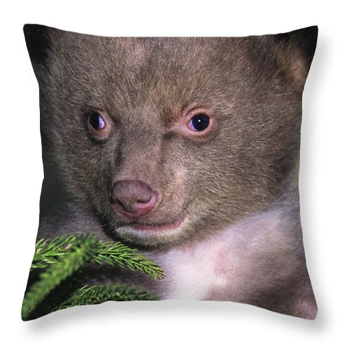Black Bear Throw Pillow featuring the photograph Black Bear Cub Portrait Wildlife Rescue by Dave Welling