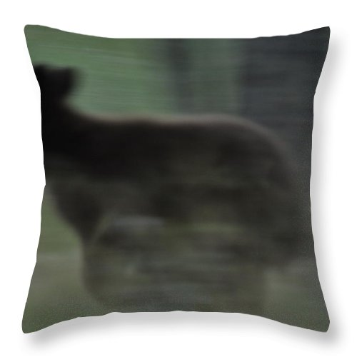 Black Bear Throw Pillow featuring the photograph Black Bear Cub Running by Frank Madia