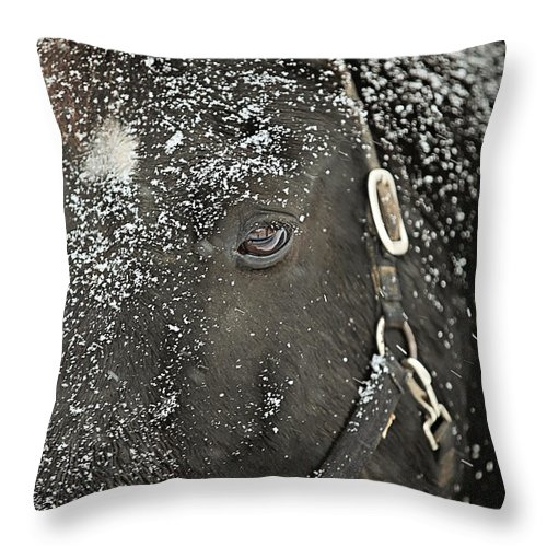 Snow Throw Pillow featuring the photograph Black Beauty In A Blizzard by Carrie Ann Grippo-Pike