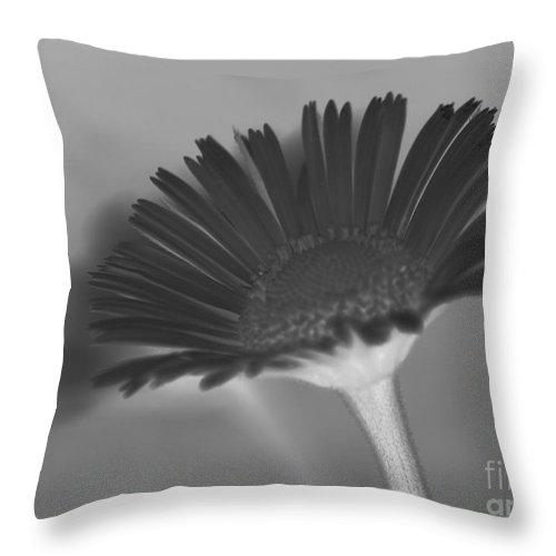 Buttercup Throw Pillow featuring the photograph Black Buttercup by Four Hands Art