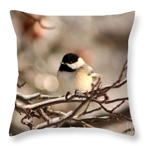 Mccombie Throw Pillow featuring the photograph Black-capped Chickadee by J McCombie