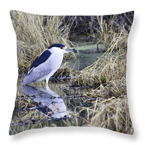 Nycticorax Nycticorax Throw Pillow featuring the photograph Black Crowned Night Heron by Paul Riedinger
