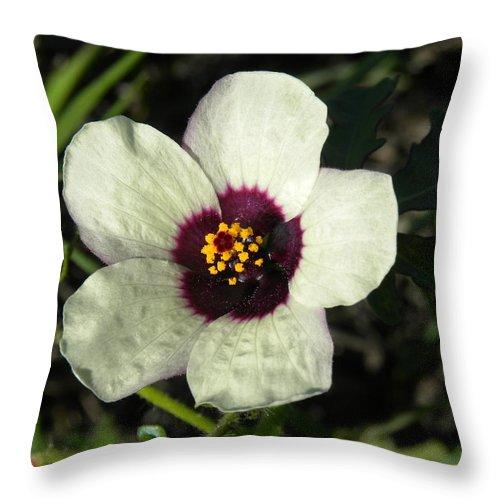 Black Throw Pillow featuring the photograph Black Eye Susan In The Prairie by Sheri Lauren