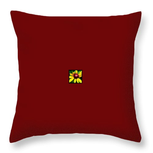 Yellow Throw Pillow featuring the photograph Black-eyed Susan by Laura Lawless