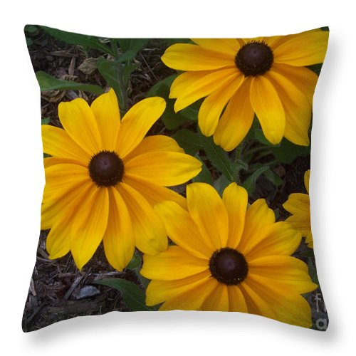 Black-eyed Throw Pillow featuring the photograph Black Eyed Susan by Sandra Clark