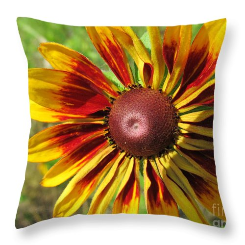 Flower Throw Pillow featuring the photograph Black Eyed Susan Variety by Tina M Wenger